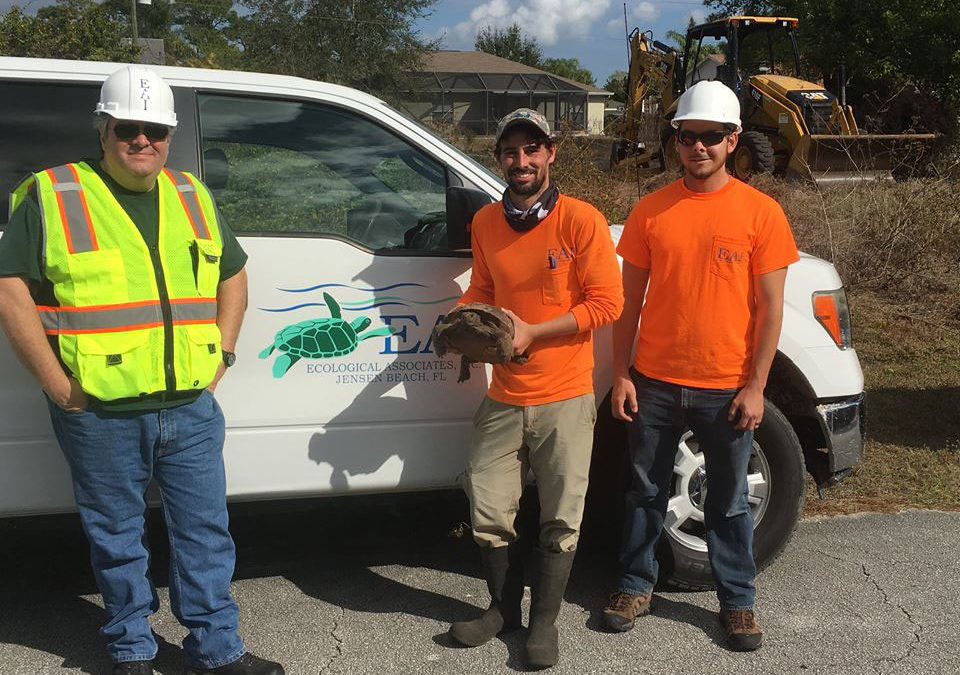 Habitat for Humanity Gopher Tortoise Relocation