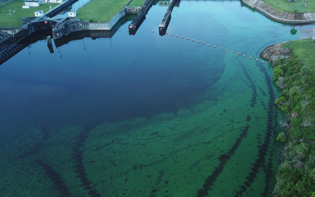 2018 Blue-Green Algae Crisis