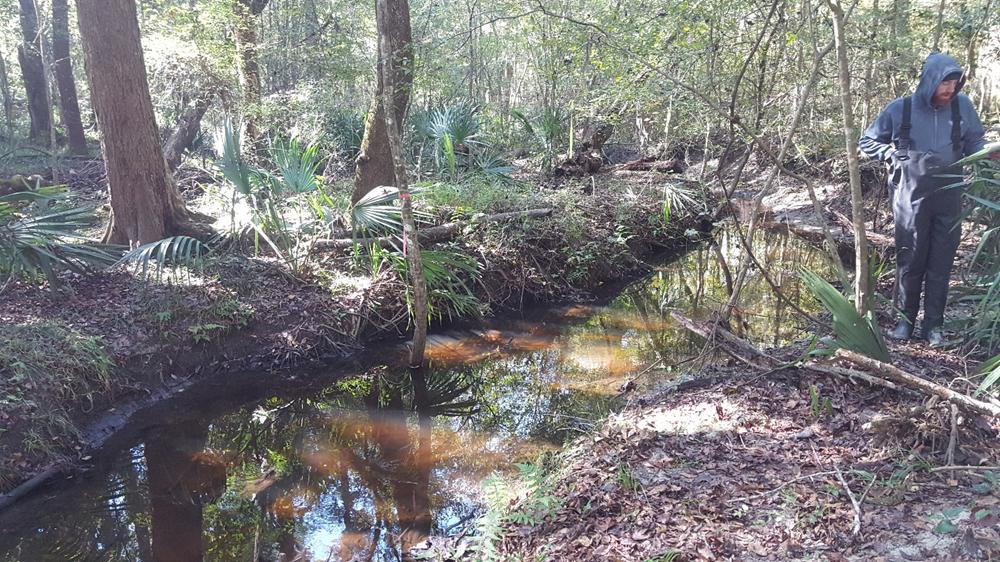 Freshwater Stream Habitat Assessments and Macroinvertebrate Taxonomy