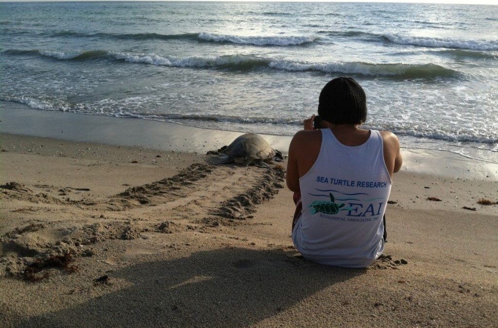 EAI's Sea Turtle Nesting Report