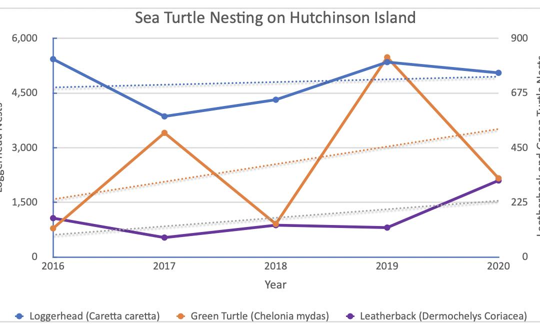 EAI's 2020 Sea Turtle Nesting Report